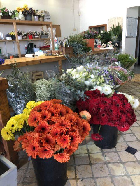 מנטור פרחים בארות יצחק